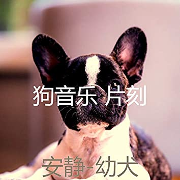 安静-幼犬
