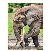 DIY 数字油絵 数字キットでペイント ホームデコレーション - 40* 50 cm 象の動物 キャンバスの油絵 大人の子供のためのギフト