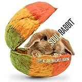 Ambiguous College Hermit (Live)