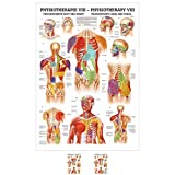 Sport-Tec Triggerpunkte Kopf und Rumpf Mini-Poster Anatomie