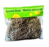 FloraCraft Spanish Moss 8 Ounce Natural...