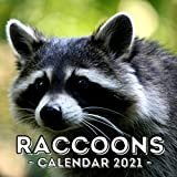 Racoons: 2021 Calendar, Cute Gift Idea For Racoon Lovers Men And Women