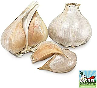 Elephant Garlic (Ajo Elefante) Sorted Bulbs! Great for Fall Planting! Different Sizes! (1 LB)