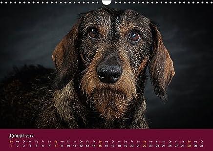 Hundeblicke / Augenblicke (Wandkalender 2017 DIN A3 quer): Ob charakterstarker Rauhaardackel, lustiger Chihuahua, ernster Boxer oder edler Schäferhund ... das Jahr! (Monatskalender, 14 Seiten )