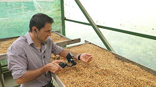 Cool beans: learn all about coffee creation on a Costa Rican farm