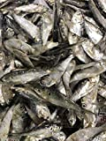 Bestbait Brand Preserved Salted Whole Bait Shad 2 1/2-4' Length. 2 lb Bag