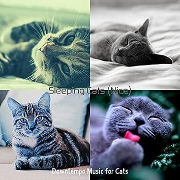 Sleeping Cats (Nice)