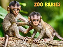 Image: Watch Zoo Babies | A heart warming and inspiring series welcoming the arrival of new members of the animal kingdom in Zoo's around the world, as well as showcasing endangered species being born in captivity. Perfect family viewing packaged with fun, colourful graphics designed to capture the attention of little ones