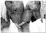 Panorama Poster Pareja Elefantes 100x70cm - Impreso en Papel 250gr - Poster de Animales - Cuadros Decorativos de Animales - Cuadros Salón Modernos - Cuadros Dormitorio