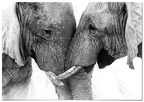 Panorama Poster Pareja Elefantes 30x21cm - Impreso en Papel 250gr - Poster de Animales - Cuadros Decorativos de Animales - Cuadros Salon Modernos - Cuadros Dormitorio