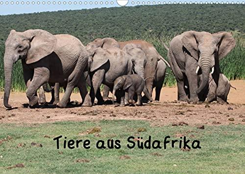 Tiere aus Südafrika (Wandkalender 2022 DIN A3 quer): Wildtiere aus dem Krüger-Park und dem Addo Elephant Park (Monatskalender, 14 Seiten )
