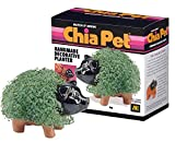 Chia Pet Pig - 1 Each