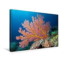 CALVENDO Premium Textil-Leinwand 45 x 30 cm Quer-Format Diese Fächerkoralle erglüht im Schein des Unterwasserblitz, Leinwanddruck von Ute Niemann