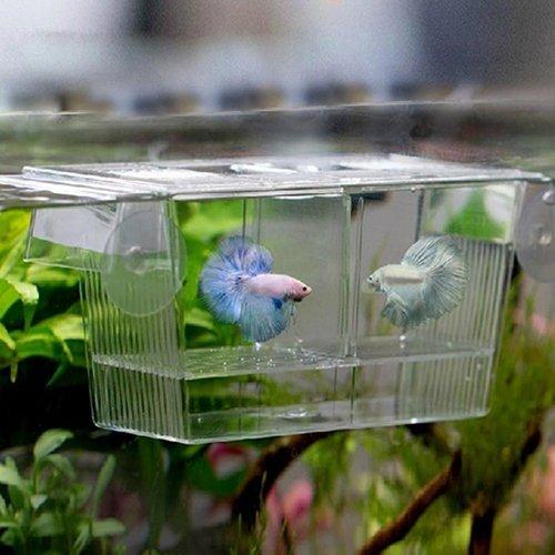 Yinong S/M Ablaichkasten aus Plexiglas Fischzucht Isolation Box (20 x 10 x 10cm)