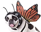 California Costumes Butterfly Dog Costumes, Pet, Multi, Extra Small