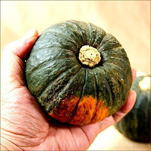 北海道産 共選 坊ちゃんかぼちゃ 3玉入り(1玉 300g) ハロウィン