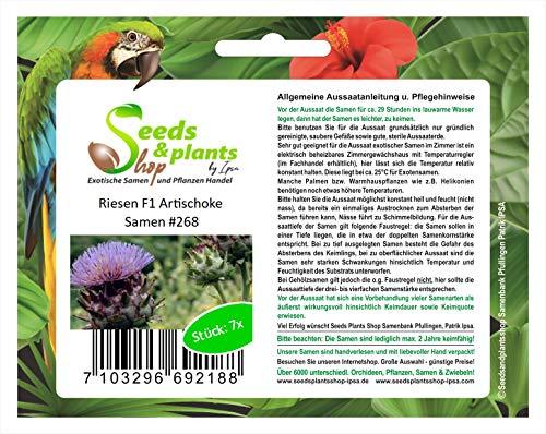 7x Riesen F1 Artischocke Artischocken Samen Gemüse Pflanze Garten #268