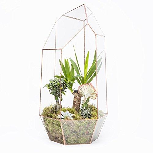 The Urban Botanist Cuivre Mega Gem Terrarium – Presque 1 metre Haut, disponible avec Live plantes artificielles, Terrarium - frame only