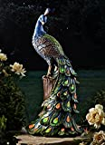 ABC Home Garden Pfau Gartendeko | Dekofigur | Deko, Polyresin, Kunststoff, 50 cm, Mehrfarbig, 22627