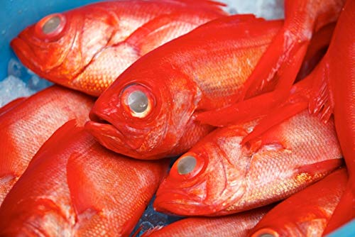 高知産 ( 金目鯛 キンメダイ )藁焼きフィーレ 大 冷凍 真空パック 刺身 たたき 宇和海の幸問屋