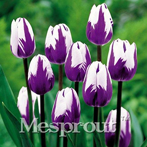 10PCS de haute qualité Graines de fleurs Jardin Tulip semences Bonsai Graines Balcon Pot Plus Beaux * Plantes colorées semences non bulbes de fleurs