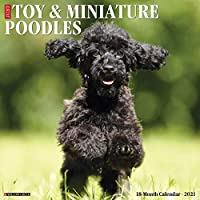 Just Toy & Miniature Poodles 2021 Calendar