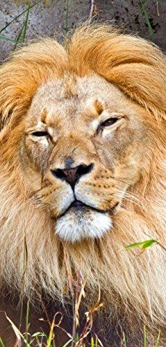 Deurposter zelfklevend - majestueuze leeuw - 90x205cm en 100x210cm - fotobehang poster deurfolie behang - T00094