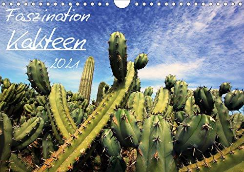 Faszination Kakteen (Wandkalender 2021 DIN A4 quer)