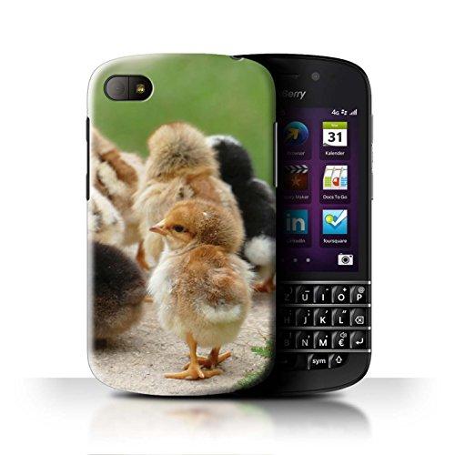 Stuff4® Hülle/Hülle für BlackBerry Q10 / Küken/Huhn Muster/Niedlich Haustiere Kollektion