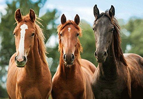 3 D Platzset Pferde, braun, 2erSet, Tischset, Tier Tiere, Pferd Pony
