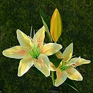 bethlehem lights calla lily