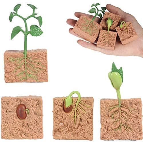 WINBST Modelo de proceso de crecimiento de plantas de PVC, kit de ciclo, miniplanta de modelo, juguete educativo para niños