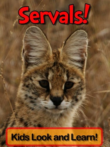 Servals! Learn About Servals and Enjoy Colorful Pictures - Look and Learn! (50+ Photos of Servals) (English Edition)