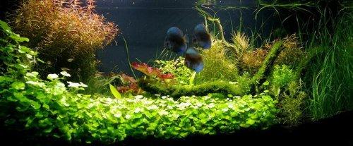 Unterwasser-Landschaft Diskus-Traum für EIN 200 Liter Aquarium