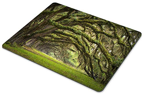 Smooffly Gaming Mouse Pad Custom,Oaks Avenue Charleston SC Plantation Live Oak Trees Forest Landscape Mousepad Non-Slip Rubber Rectangle Mouse Pads for Computers Laptop Photo #4