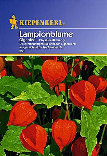 Physalis alkekengi Lampionblume Gigantea