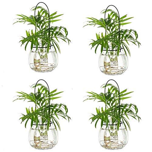 Portavelas de Cristal Terrario 4 Piezas Transparente Calabaza Plantas Colgantes de Aire Terrarios Contenedores de Plantas para Boda Jardín Fiesta