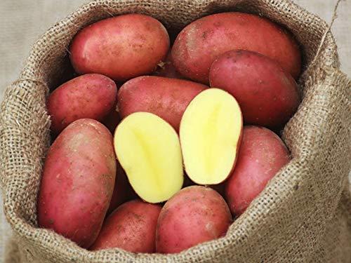 Laura Kartoffeln rot festkochend 5 kg Netz