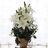 山久 造花 シルクフラワー 上品な カサブランカ の 鉢植 1804-1303 CT触媒加工
