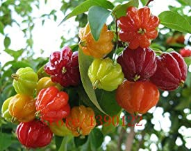 Brand New! 20pcs Surinam Cherry seeds, Pitanga fruit seeds,Brazilian Cherry{red} ,rare plant for home & garden