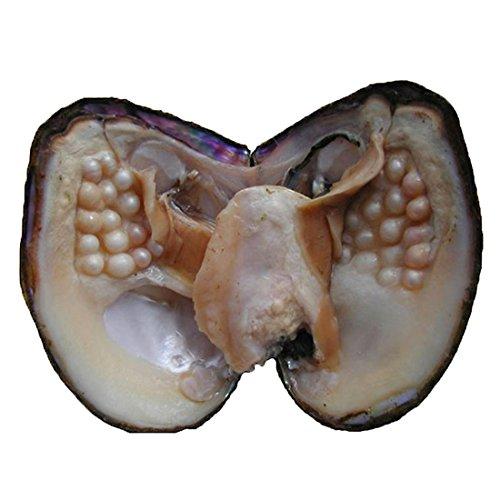 Milky Way Oyster Pearl Anniversary Geschenke Süßwasser-Zuchtperle oval Perlen 5-7 mm Austern mit Perle Innen Jahrestag Geschenke für Frauen