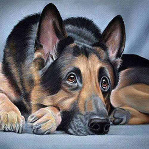 DIY 5D Diamant Malerei Kits, Kristall Strass Diamant Stickerei Gemälde Leinwand Bilder Kunsthandwerk für Heimtextilien Tierhund-40 x 50 cm (16 * 20 Zoll)