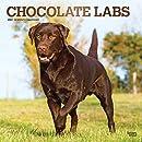 Chocolate Labrador Retrievers 2021 Calendar: Foil Stamped Cover