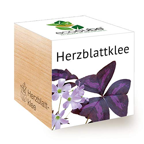 Feel Green Ecocube Herzblattklee/Love Plant, Nachhaltige Geschenkidee (100% Eco Friendly), Grow Your Own/Anzuchtset, Pflanzen Im Holzwürfel, Made in Austria