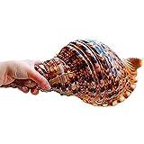 LINKLANK Concha de mar, 20 – 23 cm, conchas de mar naturales, caracol fénix, decoración de peceras para manualidades, bodas, festivales, fiestas, hogar, dormitorio, decoración de mesa