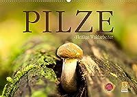 Pilze - fleissige Waldarbeiter (Wandkalender 2022 DIN A2 quer): Sie heissen Satan, Schweinsohr, Fliegen oder Knollenblaetter: Pilze. (Monatskalender, 14 Seiten )