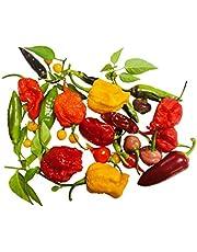50 zaden * Kleurrijke chili mix * -Met wereldkampioen pepers- -ULTRA SPICY-