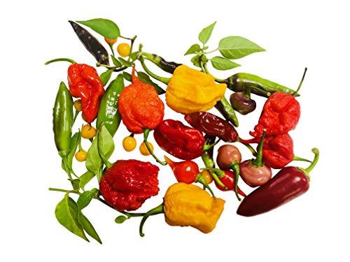 Weltrekord Chili Samen Set 7 ARTEN / 65 Samen, Die Wirklich Schärfsten in einem Mix ''