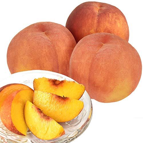 国華園 山形産 山形の黄桃 5kg もも 桃 黄桃 黄金桃 果物 食品 ピーチ フルーツ