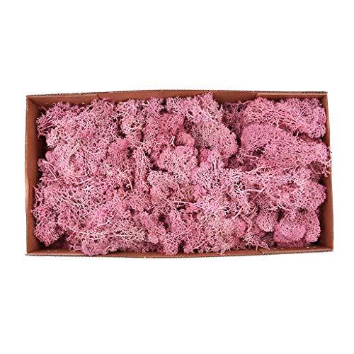 Baoblaze Natural Norwegian Reindeer Moss Preserved Dried Craft Flower Stamen - - Pink